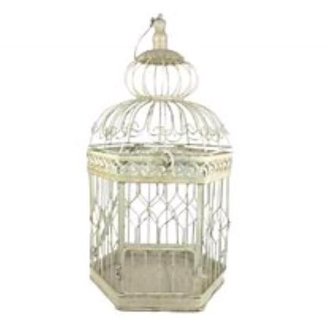 Where to find DECORATIVE BIRD CAGE in Tampa